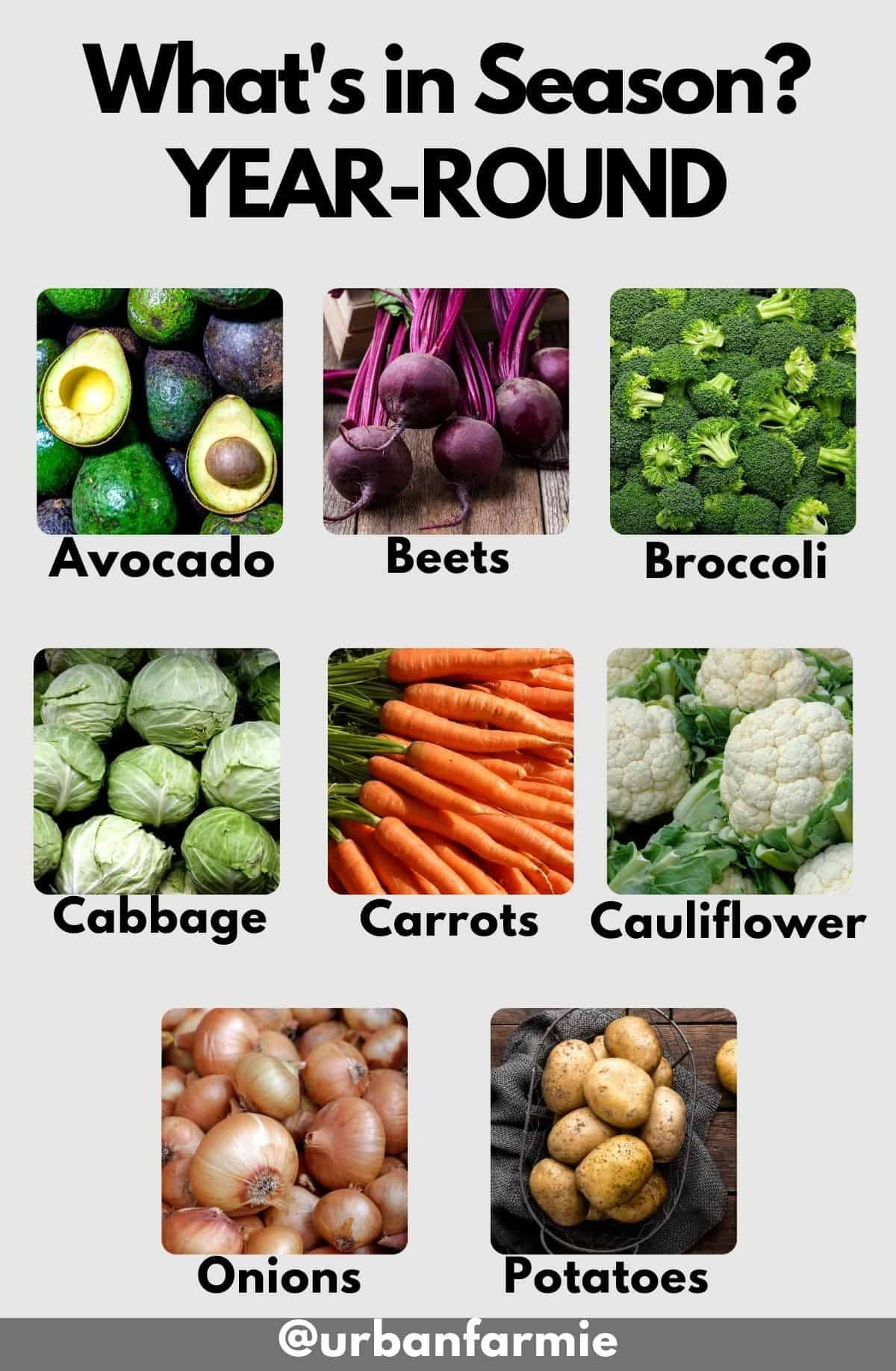 List of produce that's in season year-round as an infographic - check post for actual list!