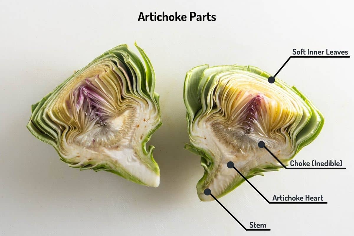 Labeled image showing the parts of the artichoke someone can eat