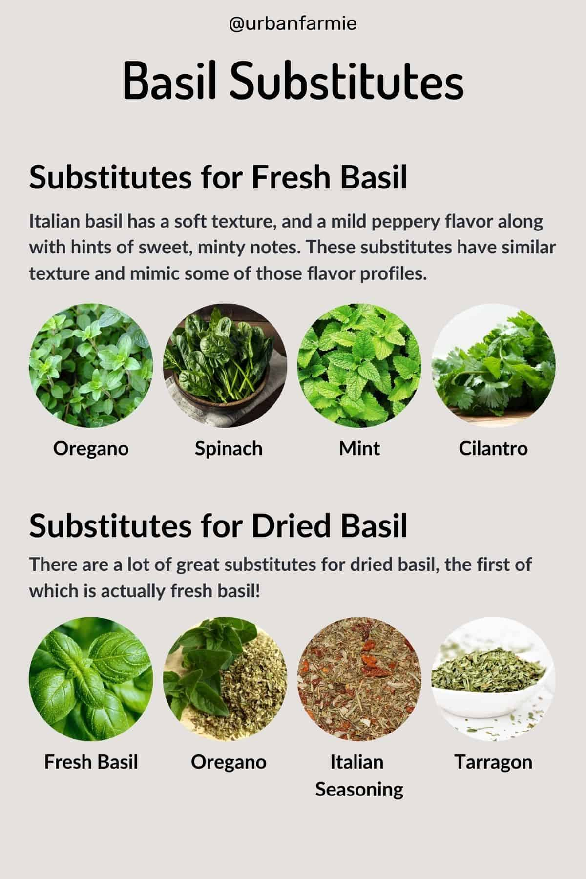 Infographic showing substitutes for fresh and dried basil - details are in the post!
