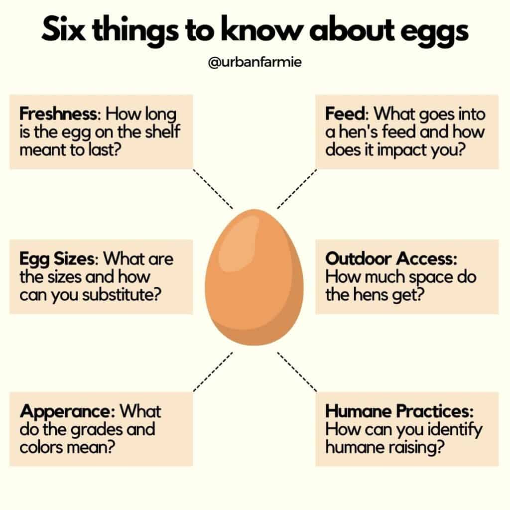 Infographic showing six key things to know about eggs