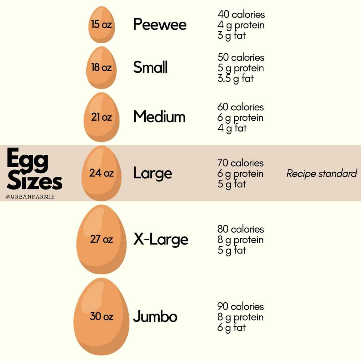 Infographic showing egg size guide