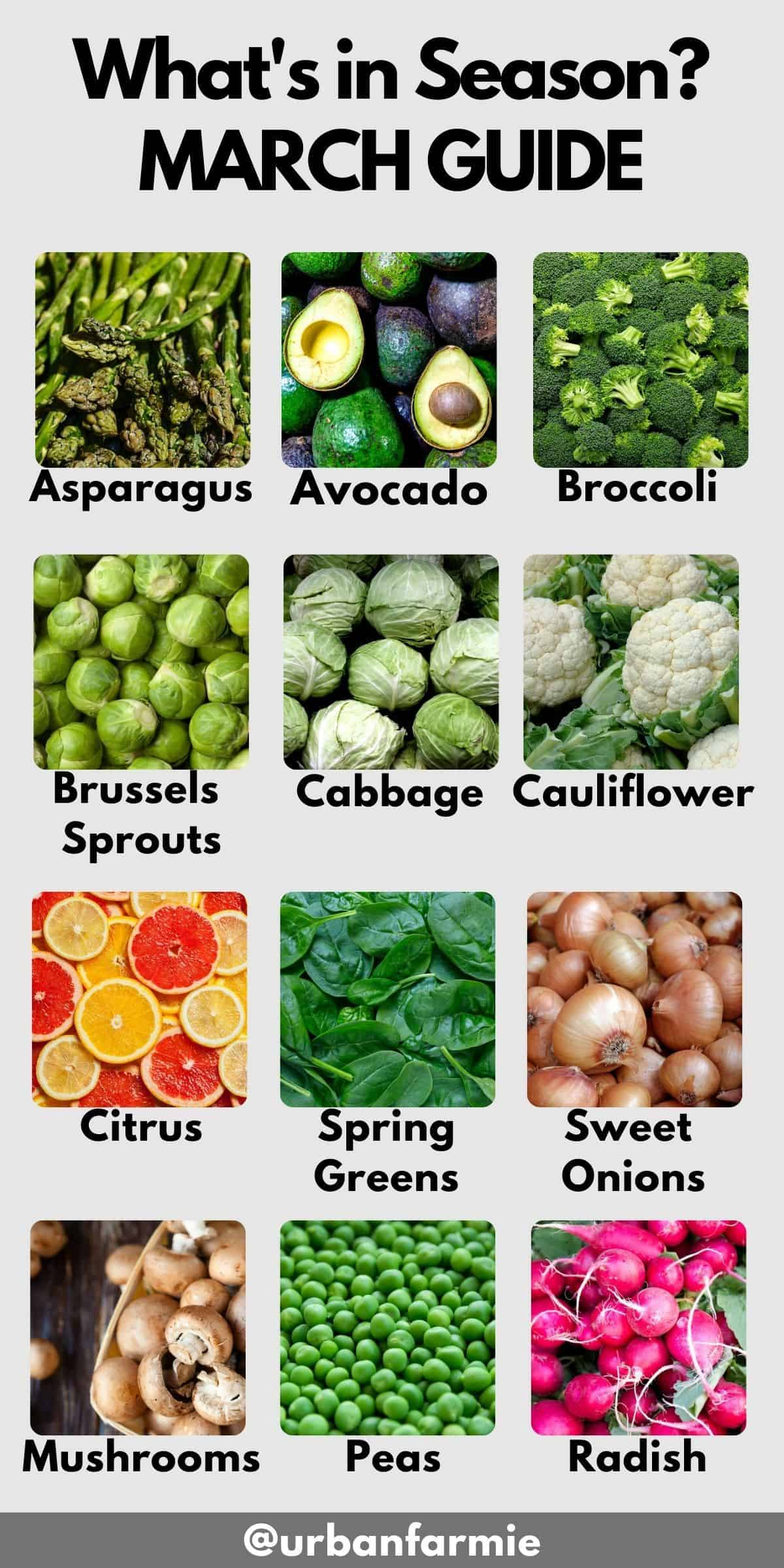 Labeled image of 12 ingredients in season in March - check post for details!