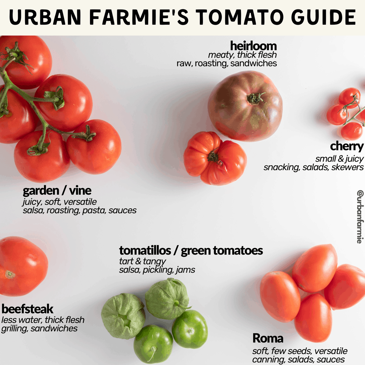 Infographic with different types of tomatoes labeled with uses