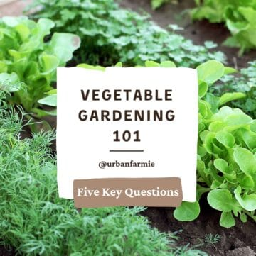 Photo of leafy greens in garden with text overlay