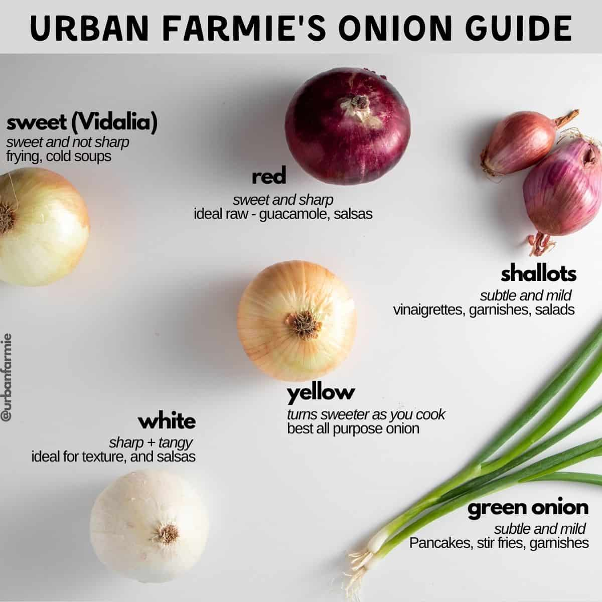 Labeled infographic showing types of onions and their uses
